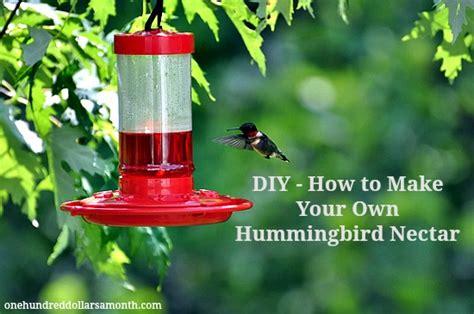 diy hummingbird nectar recipe   dollars  month