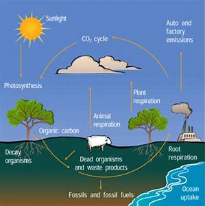 U00bb Carbon Cycle Organograph