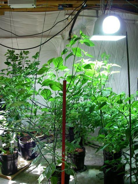 indoor vegetable garden 17 best images about indoor vegetable gardening on