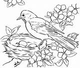 Bird Colouring Pages Nest Picolour sketch template