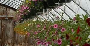 Pflanzen Für Gewächshaus : optimales klima f r pflanzen im gew chshaus ~ Whattoseeinmadrid.com Haus und Dekorationen