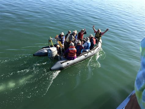 Zodiac Skiff by Golden Gate Audubon Societybrooks Island Field Trip A