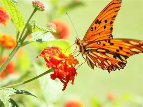 orange si鑒e social ylenia e yirina ecosistema iperteam social utility