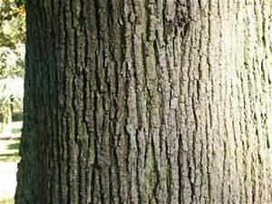 Linde Baum Steckbrief : bilder sommerlinde baumportal ~ Orissabook.com Haus und Dekorationen