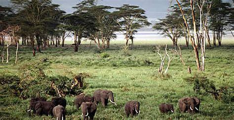 ngorongoro crater wwf