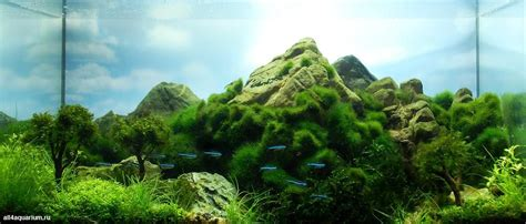 mountain aquascape 20l nano tank by bašić i like the mountain effect