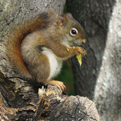 top 28 what bird seed do squirrels not like taken up