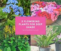 plants for deep shade 5 Flowering Plants for Deep Shade - FarmFoodFamily