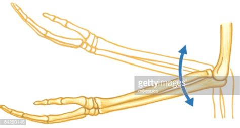 Illustration Of Elbow Hinge Joint Of Human Arm With Arrows