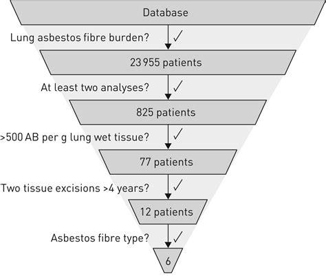 asbestos fibre burden  human lungs  insights