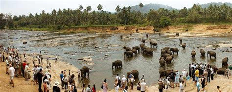 sri lanka house pinnawala elephant orphanage karusan travels pvt ltd