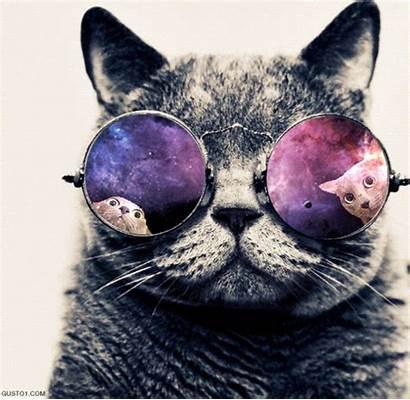Cool Cat Cats Kat Gifs