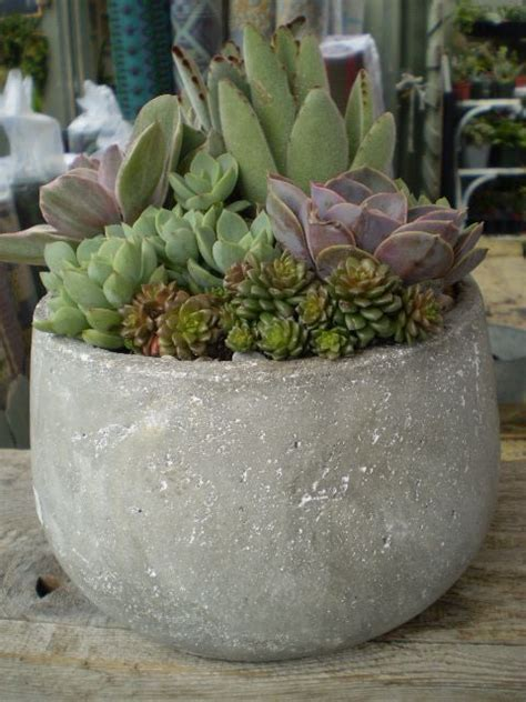 succulents in a pot succulent garden in large pot outdoors