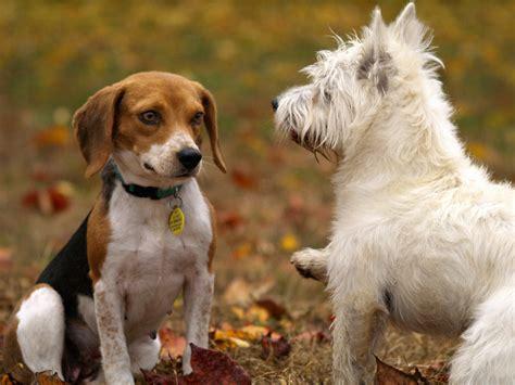 Lavorare Con Gli Animali 11 Mestieri Da Imparare Subito  Inizia Ora