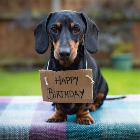 happy birthday dachshund dachshund happy birthday