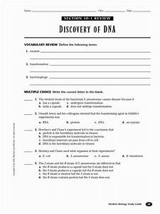 Worksheet On Dna Rna And Protein Synthesis