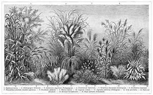 Gräser Für Den Garten : gr ser v ziergr ser f r den garten die beschreibung der pflanzen siehe unter den lateinischen ~ Sanjose-hotels-ca.com Haus und Dekorationen
