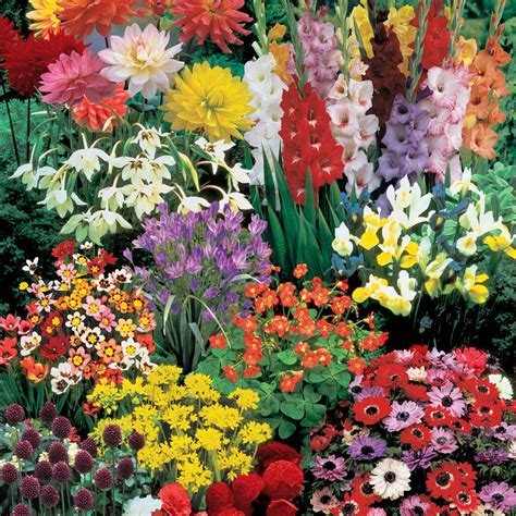 bulb flowers bulbs gardening idea landscaping gardening ideas