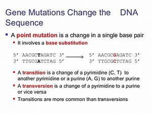 Lecture 4, gene mutation.ppt
