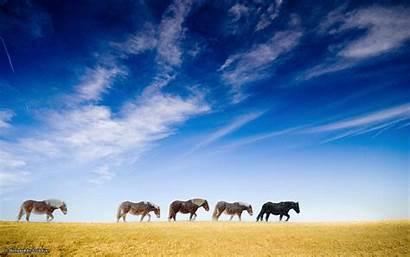 Wild Horses Wallpapers Animals Desktop Pix Snow