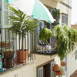 Plantes Grimpantes Pot Pour Terrasse : quelles plantes grimpantes pour un balcon marie claire ~ Premium-room.com Idées de Décoration