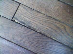 infested hardwood flooring how to prevent re infestation