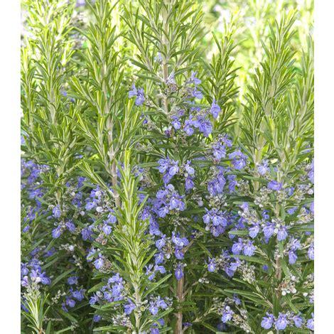 semi di fiori da piantare quali fiori piantare a marzo