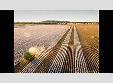 Cotton Harvest Riversleigh Forbes Australia 2016 YouTube