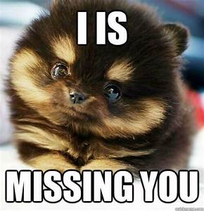 I Miss You Memes, GIFs & Images to send when you're ...