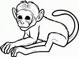 Coloring Monkey Popular sketch template