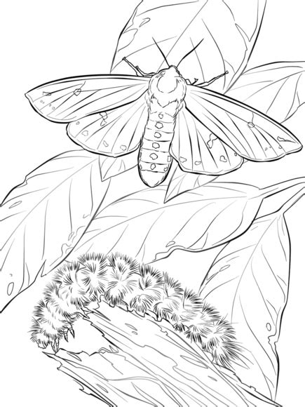 woolly bear moth  caterpillar coloring page