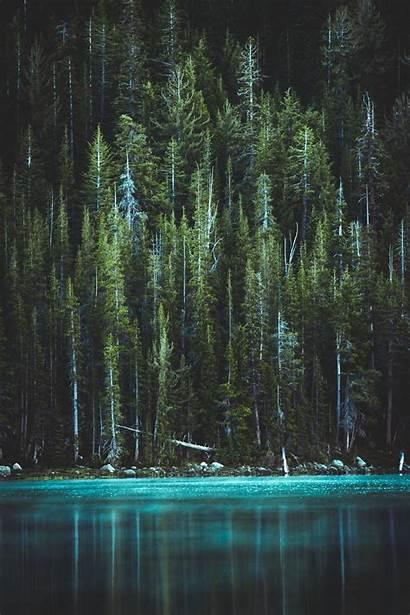 Vertical Unsplash Trees Pine Lake