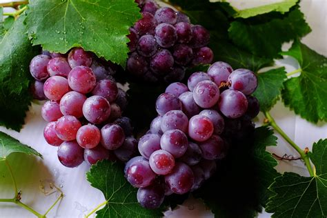 How To Grow Grapes In A Greenhouse Access Garden Products