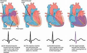 Cardiac Cycle Ecg Diagram