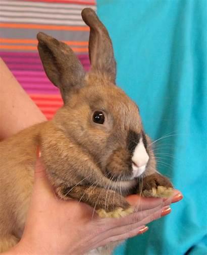 Adorable Bunny Rescue Spca Animal Three Sisters