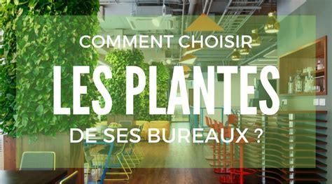 plantes de bureau quelles plantes sans entretien choisir pour vos bureaux