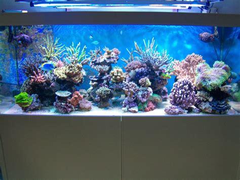 recifal sos an 233 dans pompe de brassage les coraux page 3
