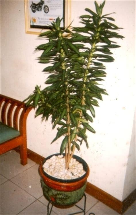 tanaman hias taman dekorasi