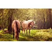 Two Beautiful Horses In The Forest  HD Wallpaper Download