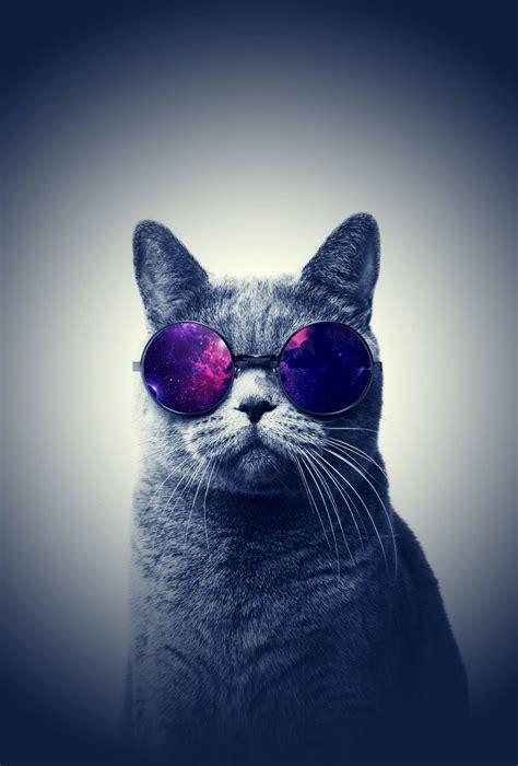 Aesthetic Cat Wallpaper Iphone by Purple Cat Aesthetic Wallpapers Top Free Purple Cat