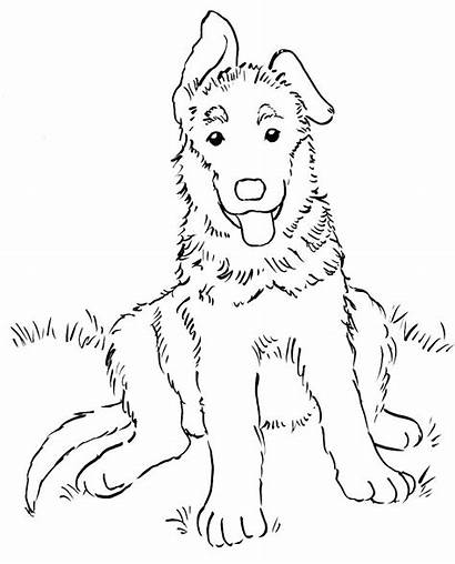 Retriever Coloring Golden Pages Puppies Shepherd Printable