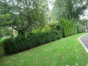 bush ideas landscaping in new york with hedges around your property winged euonomous burning bush
