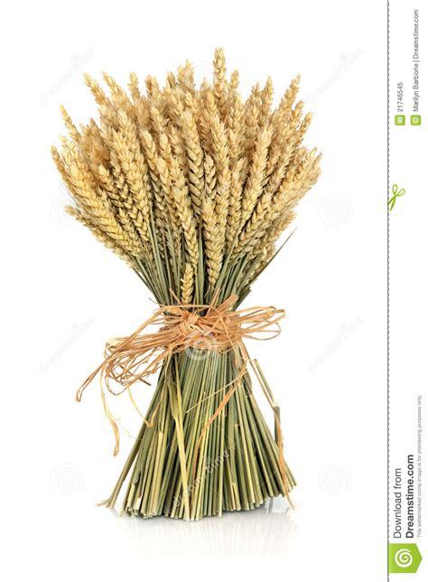 Wheat Bundle stock image. Image of food, bunch, ears - 21746545