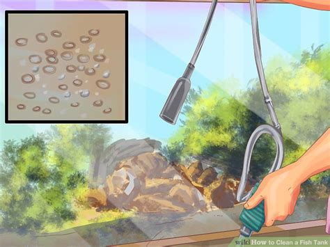 how to clean a fish tank 2 easy ways to clean a fish tank wikihow