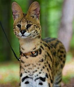 10 Wild Animals That Are Becoming Domesticated Pets ...