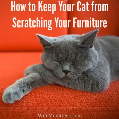 stop  cat  scratching  furniture