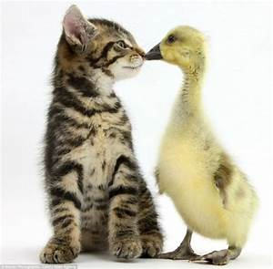 Funzug.com | Adorable Pictures Of Tiny Kittens, Cuddly ...
