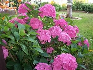 Blumen Im Garten : sch ne blumen in unserem garten gladenbach ~ Bigdaddyawards.com Haus und Dekorationen