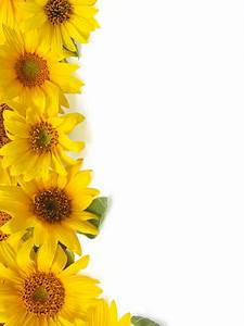 Contact Information Template Free Best Sunflower Border Stock Photos Pictures Royalty