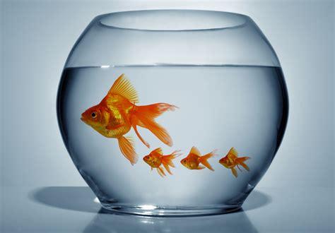 mes poissons se reproduisent que faire